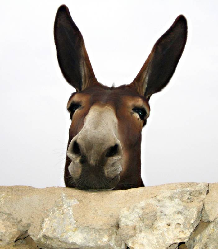 Funny Donkey Face Idiot Donkey Put Your Face